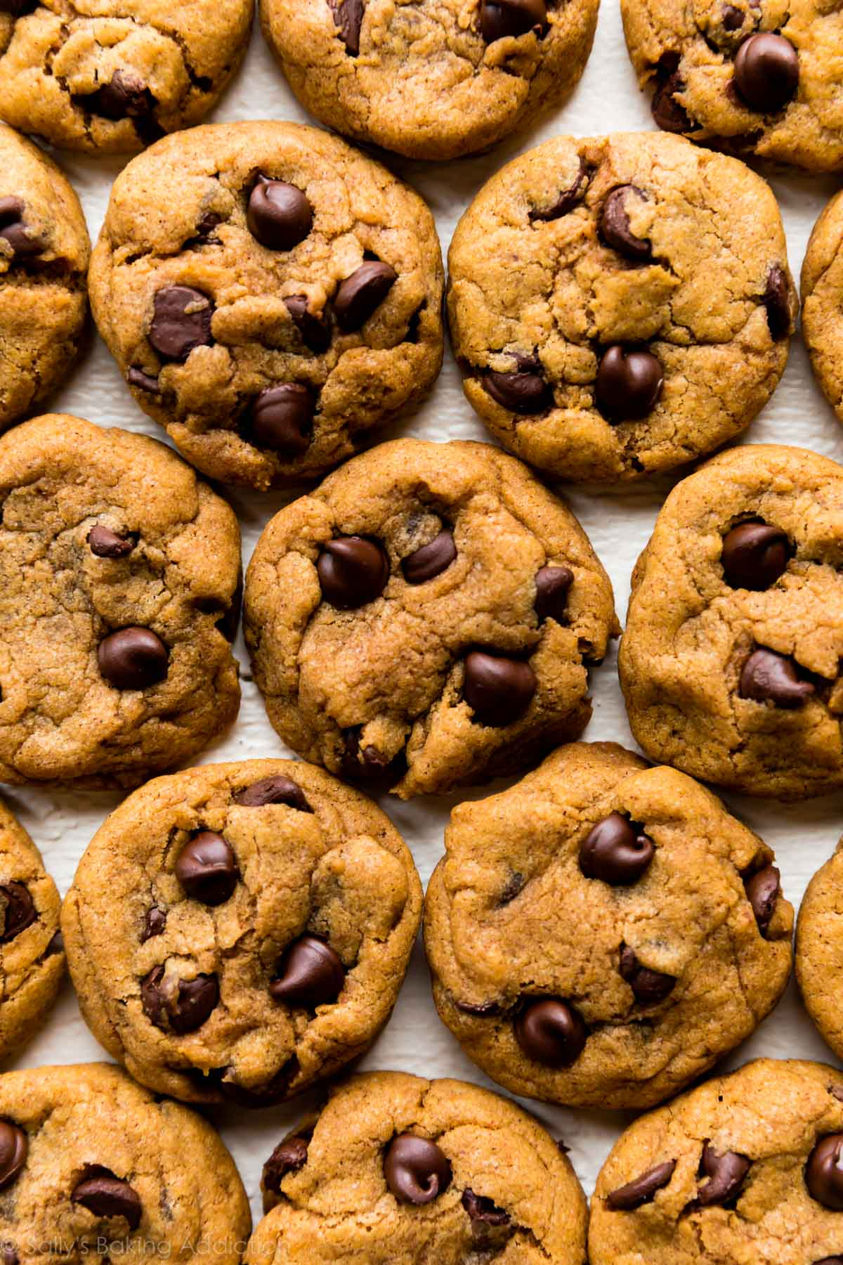 best pumpkin chocolate chip cookies sally s baking addiction