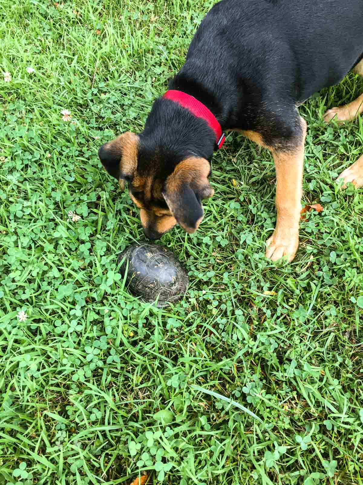 franklin-and-turtle
